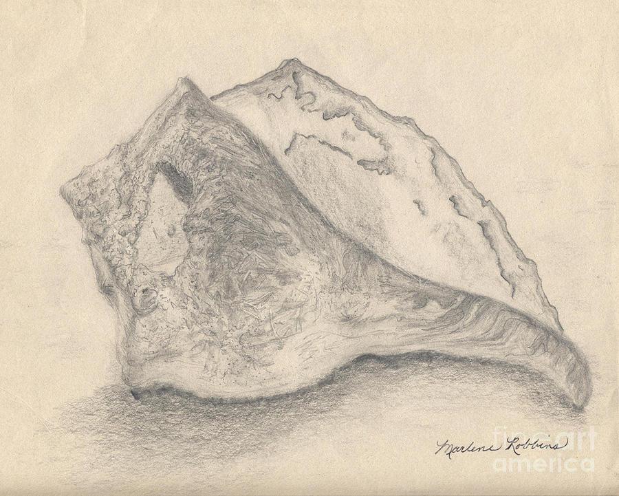 Seashell Drawing - Conch Shell by Marlene Robbins