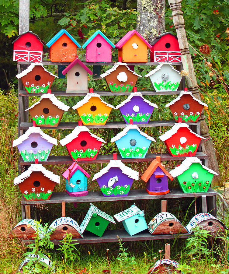 Bird House Photograph - Condos For Sale Cheep by Barbara McDevitt