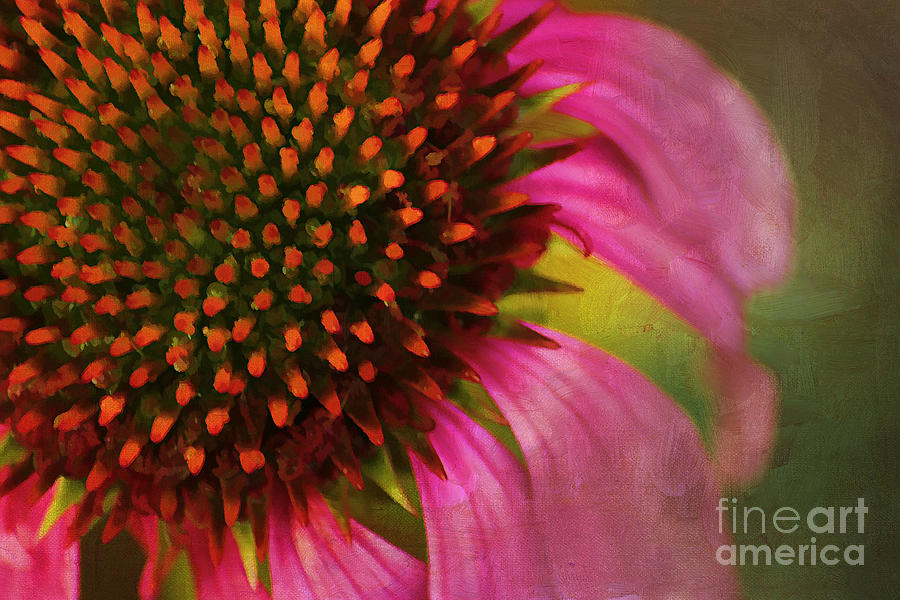 Painterly Photograph - Coneflower by Darren Fisher