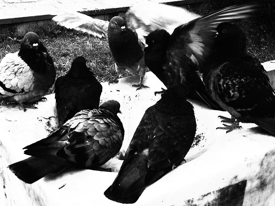 Birds Photograph - Conflict by Lucy D