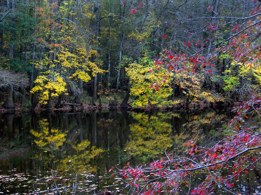 Sc Photograph - Congaree Swamp by Skip Willits