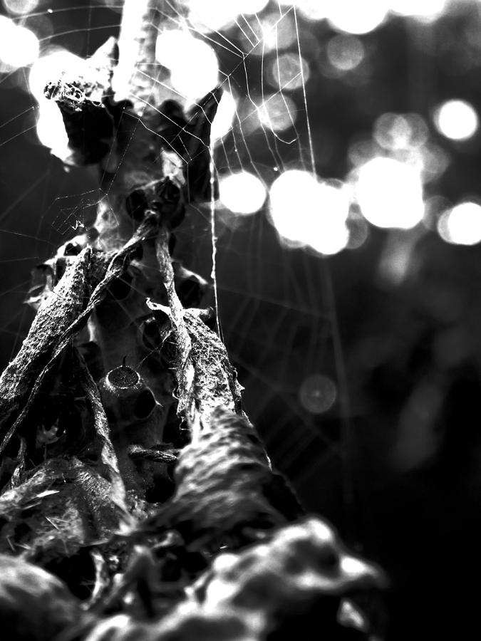 Spider Photograph - Contaminated Web by Tyler Lucas