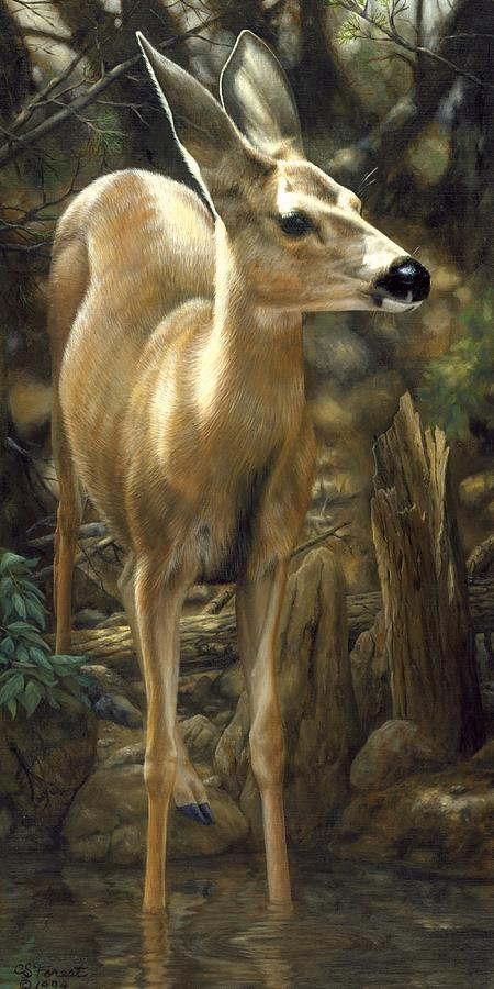 Deer Painting - Mule Deer - Contemplation by Crista Forest