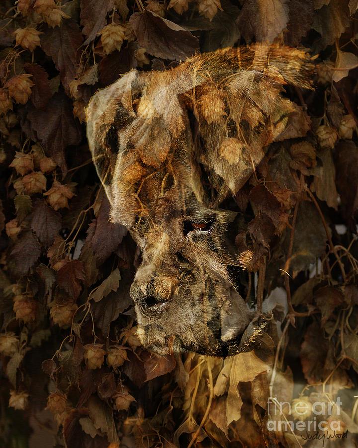 Dog Boxer Dog Digital Art - Contemplation by Judy Wood