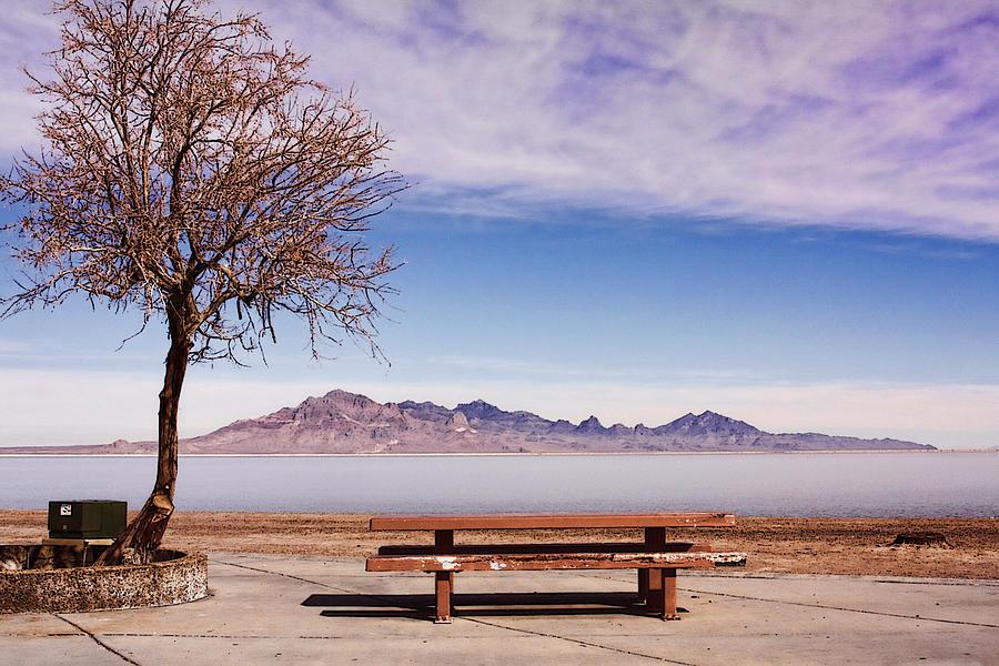Nature Photograph - Contemplation by Lisa Alex