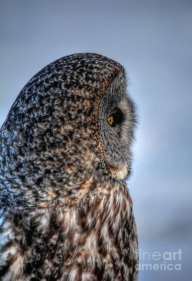 Owl Photograph - Contemplation by Skye Ryan-Evans