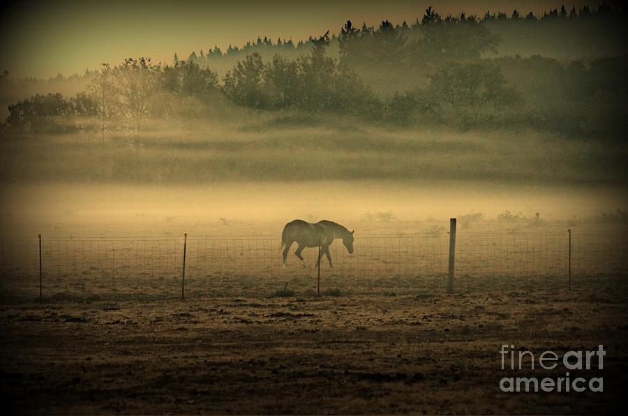 Horse Photograph - Contours Of Morning by Erica Hanel