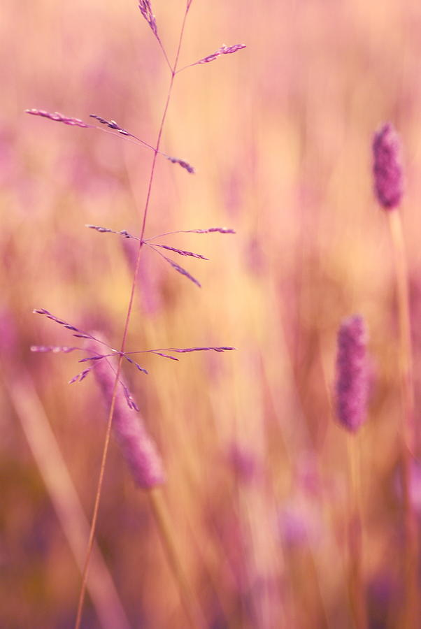Pink Photograph - Contrario - P01 by Variance Collections