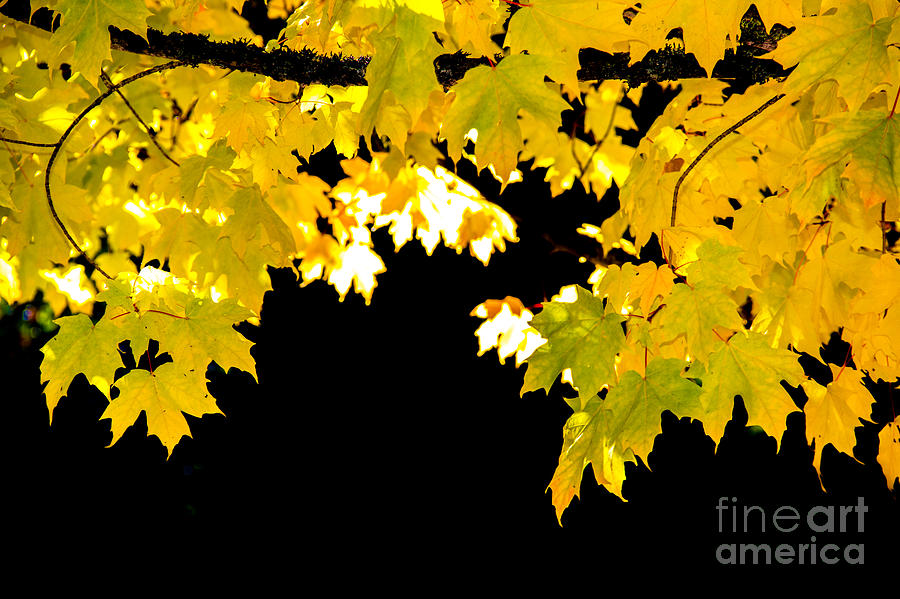 Autumn Photograph - Contrast Of Autumn, Quincy California by Tirza Roring