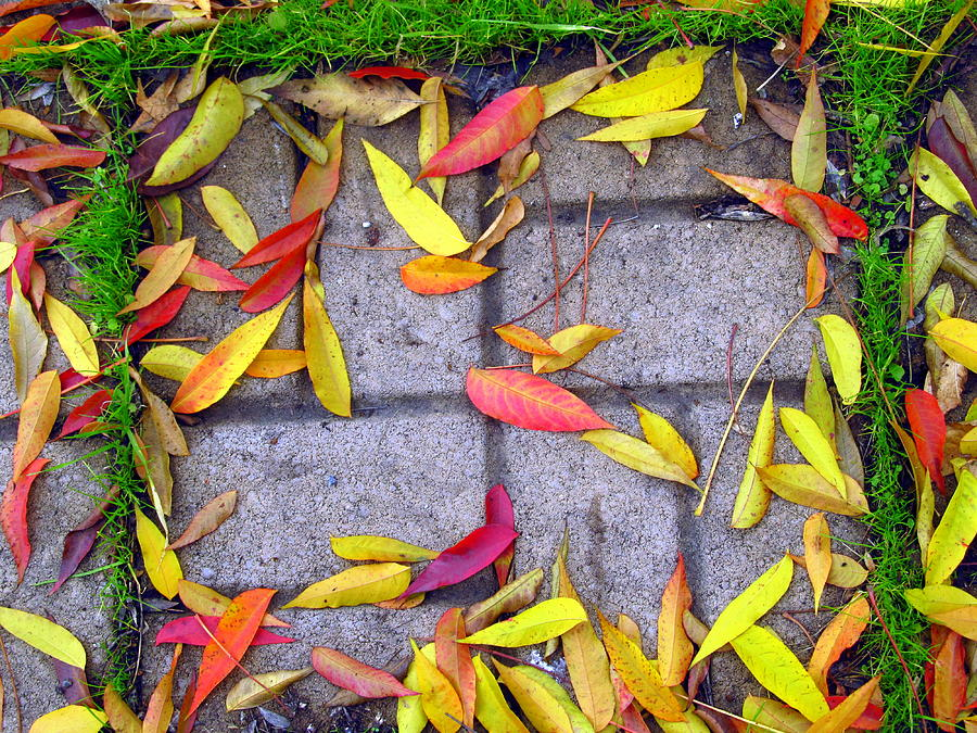 Fall Photograph - Contraste by Adda Barrios