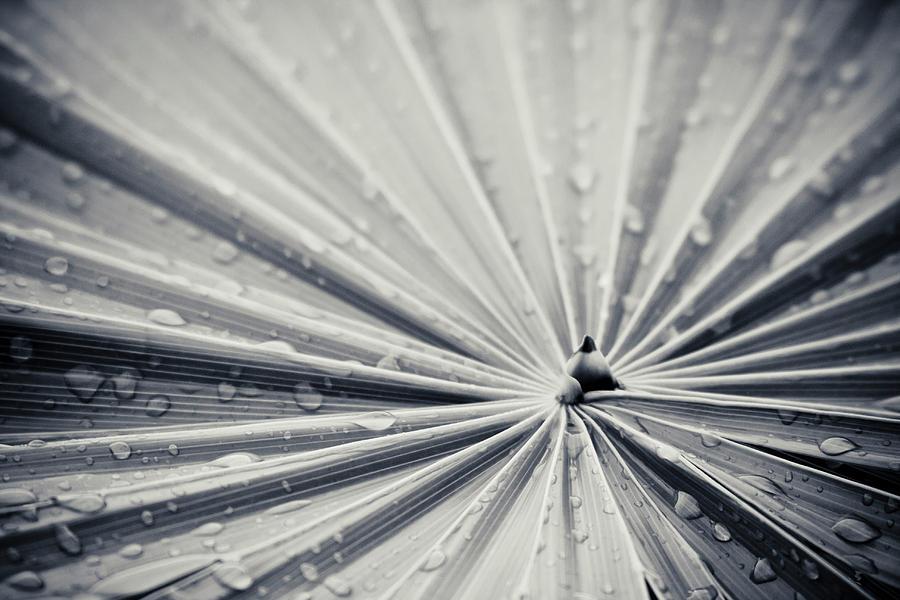 3scape Photos Photograph - Convergence by Adam Romanowicz