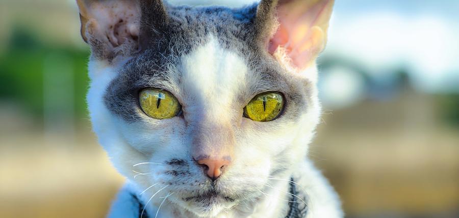 Feline Photograph - Cool Cat by Tylie Duff