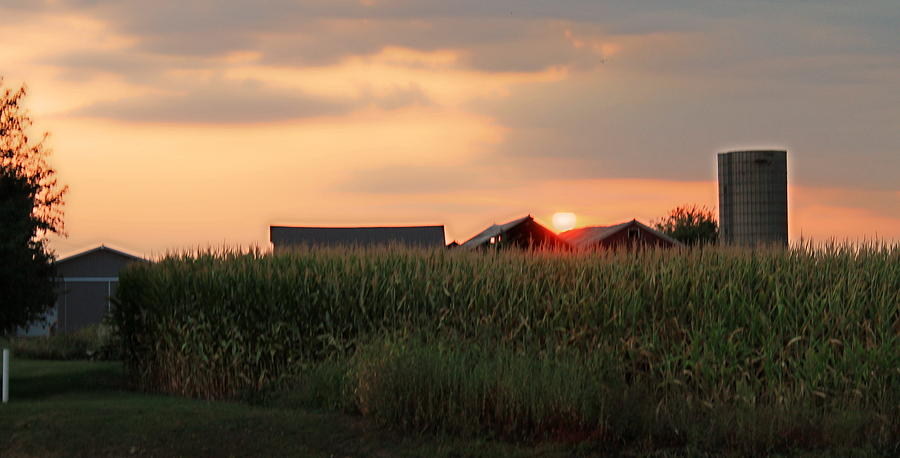 Corn Photograph - Coountry Sunset by Victoria Sheldon
