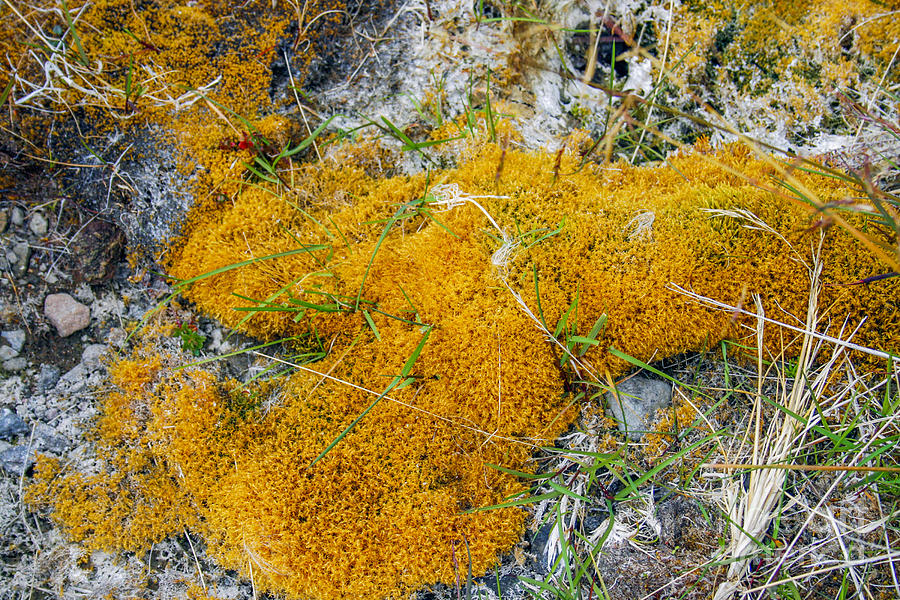 Copper Colored Moss Photograph