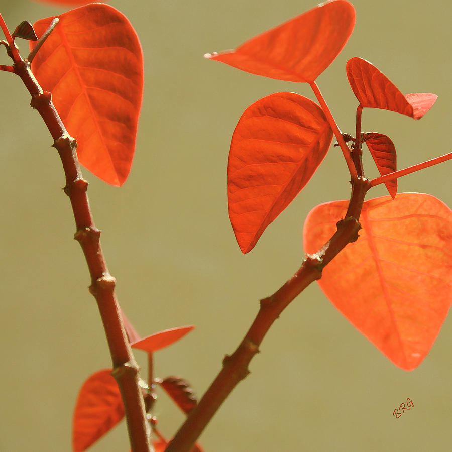 Red Photograph - Copper Plant by Ben and Raisa Gertsberg