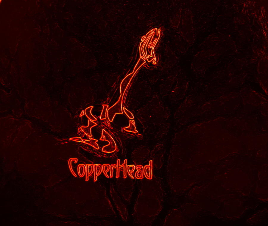 Copperhead Photograph by Rosemarie E Seppala