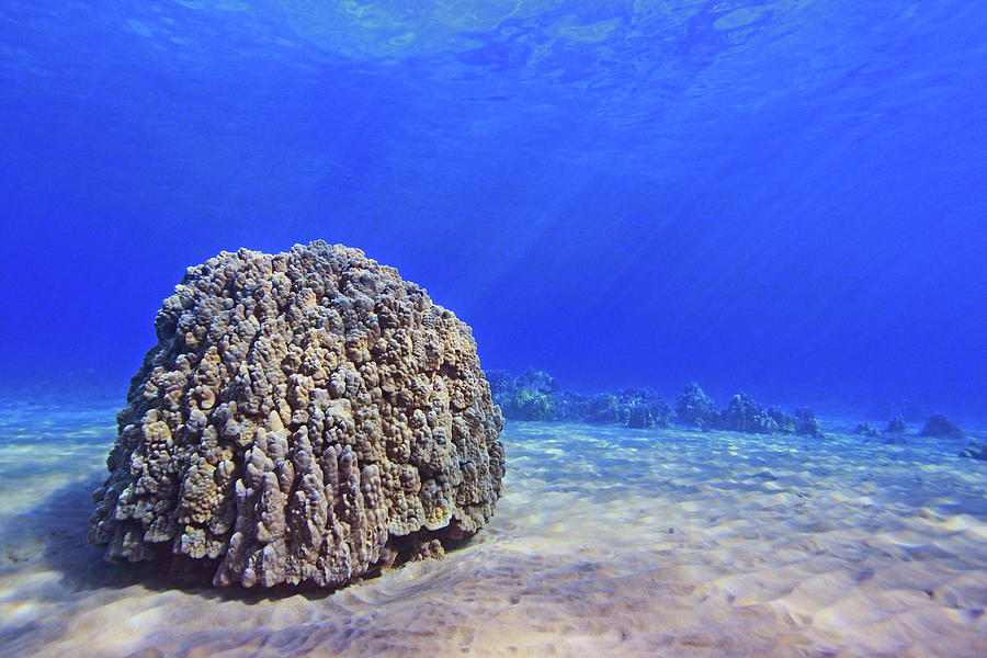 Coral Head Photograph by Chris Stankis