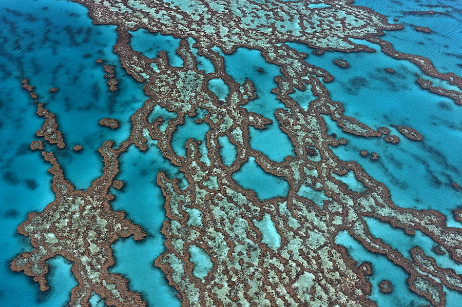 Coral On Hardy Reef Australia Photograph by Ingo Arndt