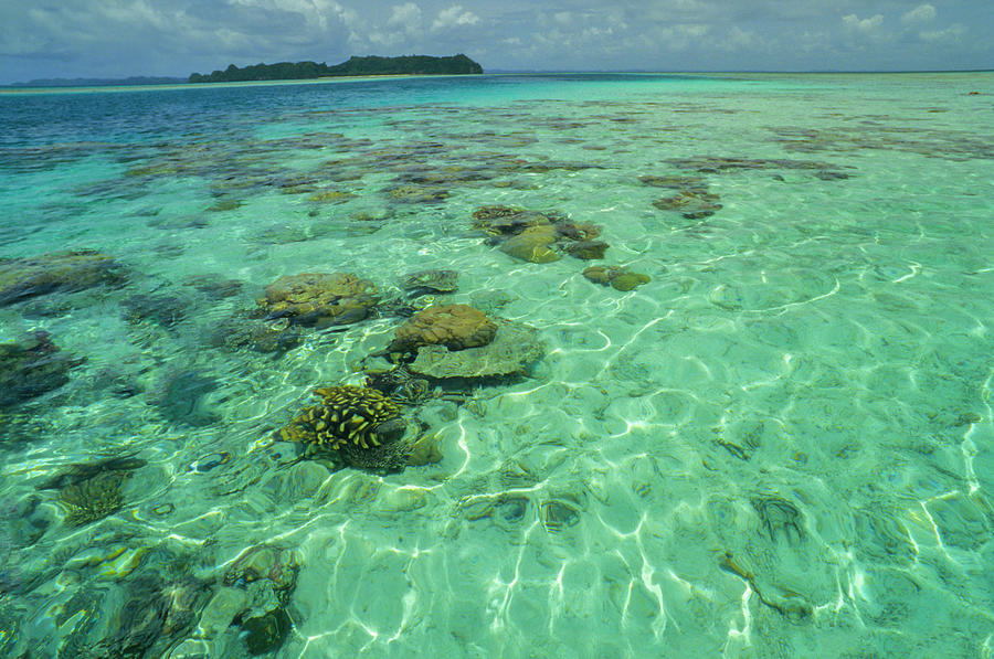 Coral Paradise Photograph by Tammy616
