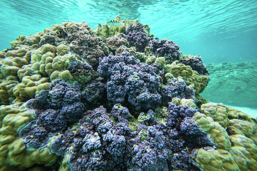 Horizontal Photograph - Coral Reef In The Pacific Ocean by Animal Images