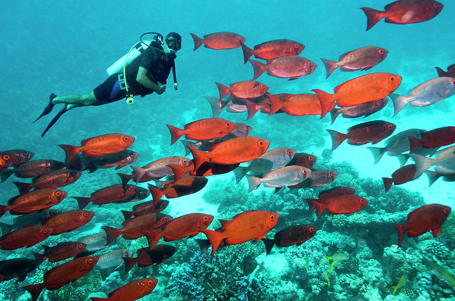 Coral Reef Scenery With Diver Photograph by Georgette Douwma