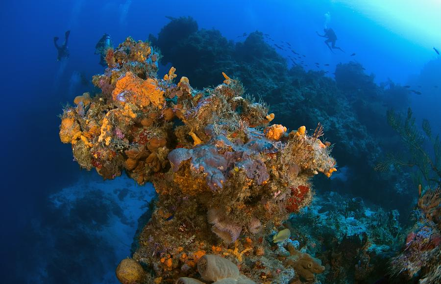 Corals And Sponges, Cozumel, Mexico Photograph