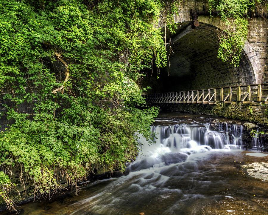 Creek Photograph - Corbetts Glen Vines- Ny by Tim Buisman