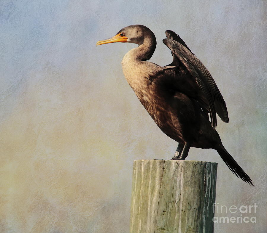 Cormorant Photograph - Cormorant by Linda C Johnson