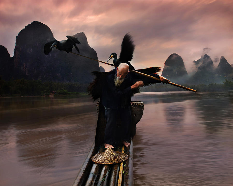 Cormorant Photograph - Cormorant Show2 by Weerapong Chaipuck