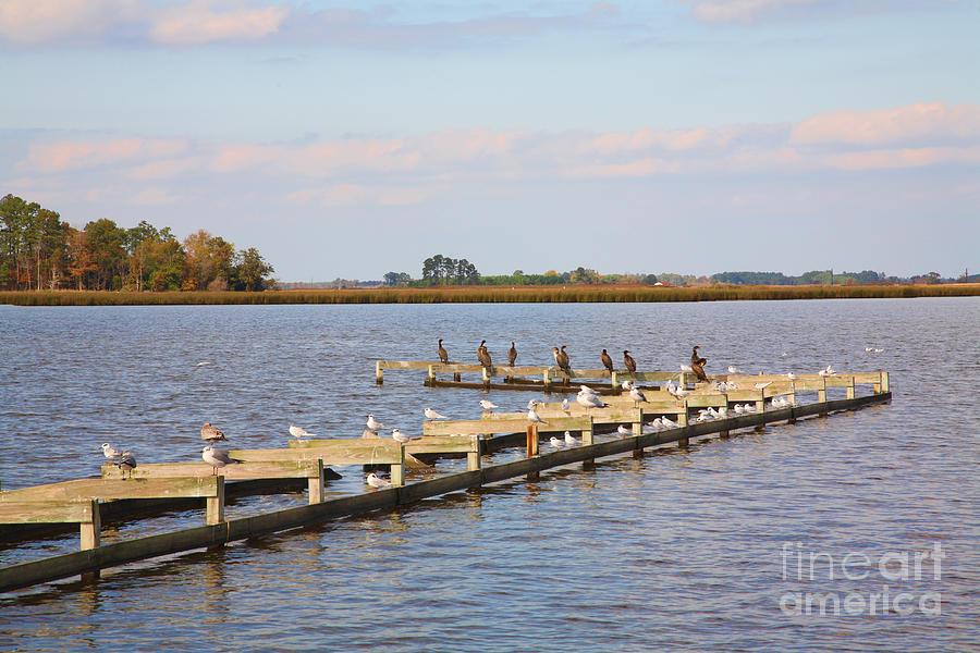 Abandoned Photograph - Cormorants And Seagulls On Old Dock Near Blackwater  National Wildlife Refuge Near Cambridge Md by William Kuta