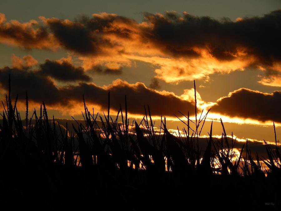 Summer Photograph - Corn En Fuego by Wild Thing