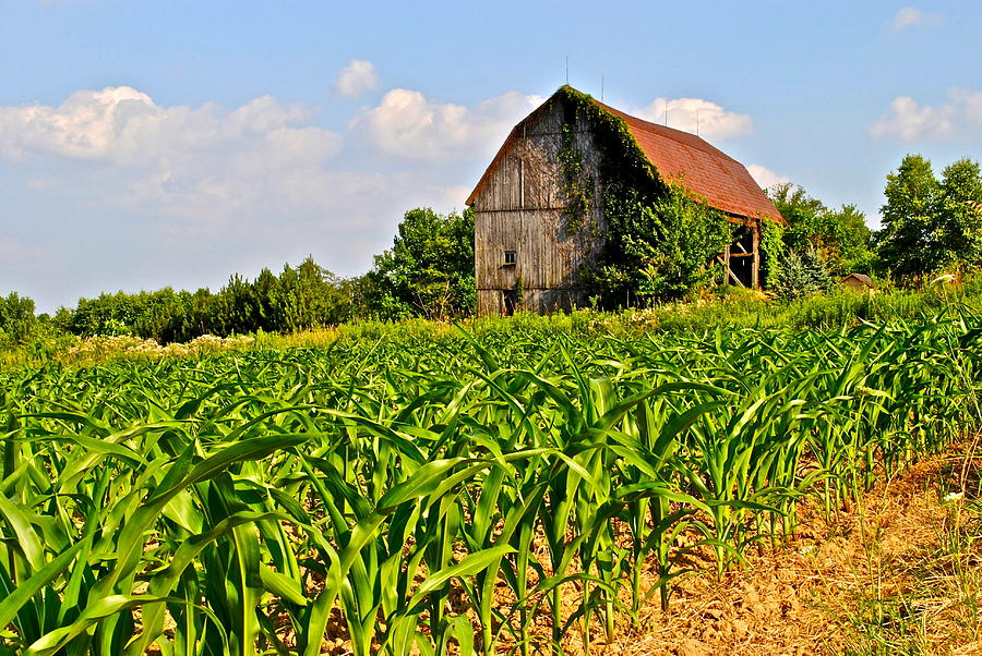 Corn Farm Photograph By Frozen In Time Fine Art Photography