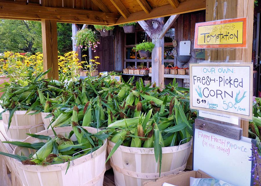 Corn Photograph - Corn by Janice Drew