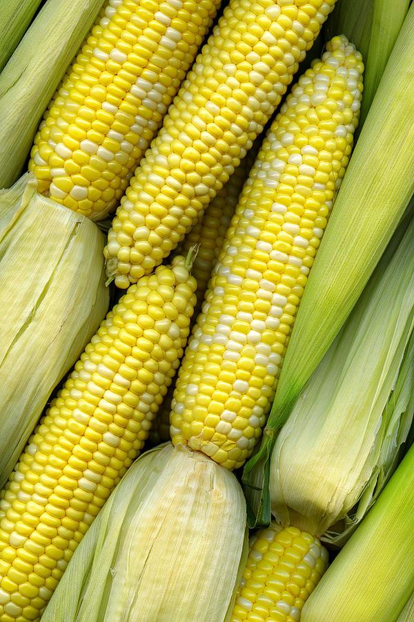 Corn Photograph - Corn On The Cob II by Tom Mc Nemar