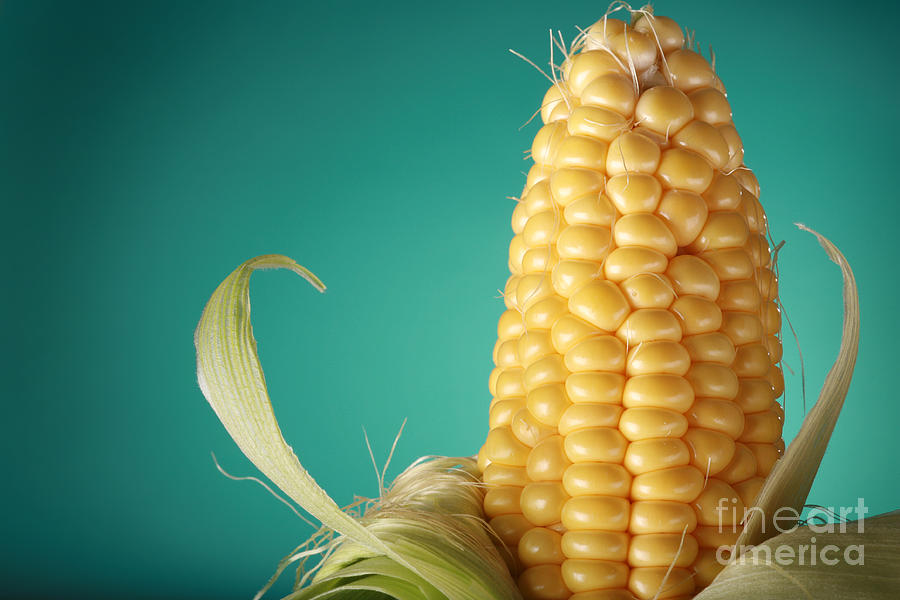 Corn Photograph - Corn On The Cob by Sharon Dominick