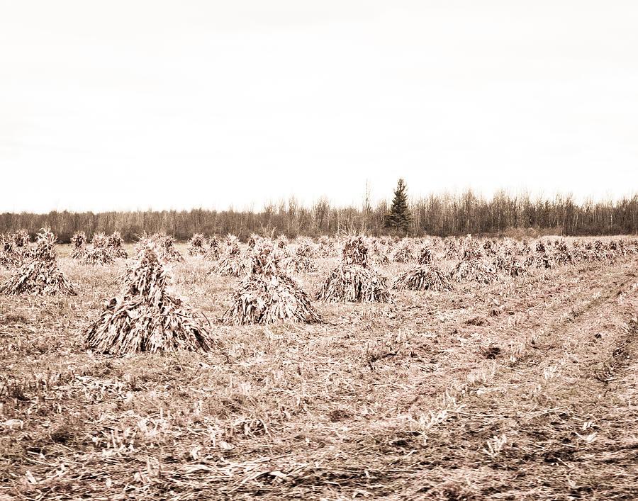 Amish Photograph - Corn Shocks by Maggy Marsh