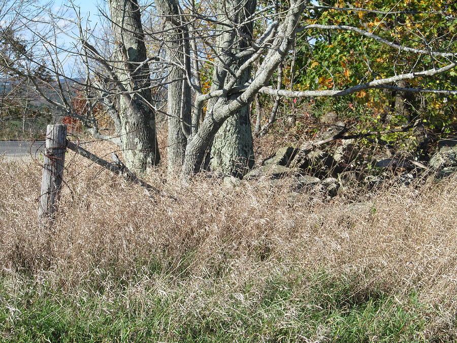 Nature Photograph - Corner Of The Field  by Loretta Pokorny
