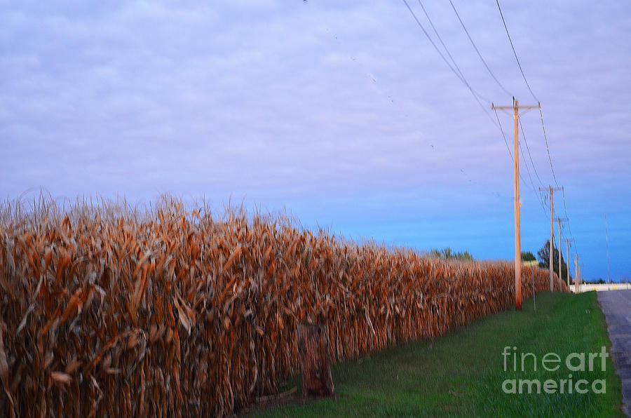 Cornfield Photograph - Cornfield In Autumn by Luther Fine Art