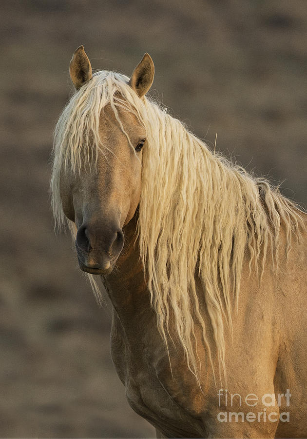 Colorado Photograph - Coronas Dawn Portrait by Carol Walker