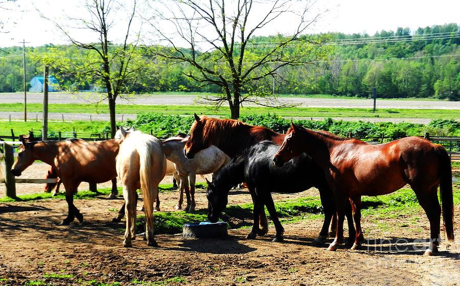 Horses Photograph - Corraled by Marcia Nichols