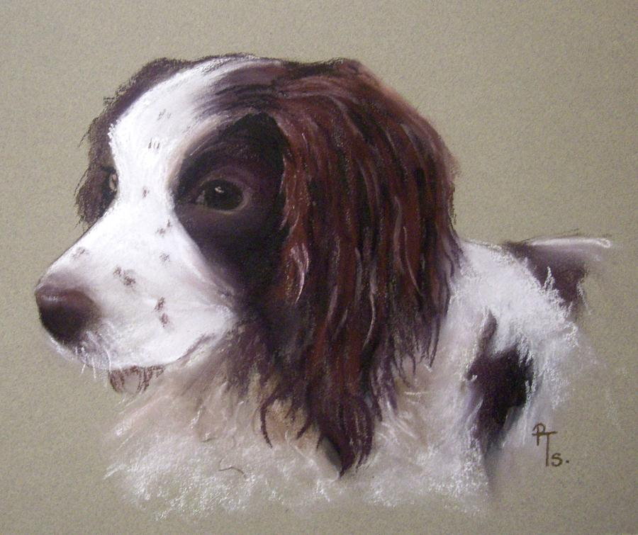 Spaniel Pastel - Corrie by Rosemarie Temple-Smith