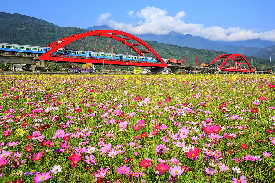 Cosmos Train Photograph by 712
