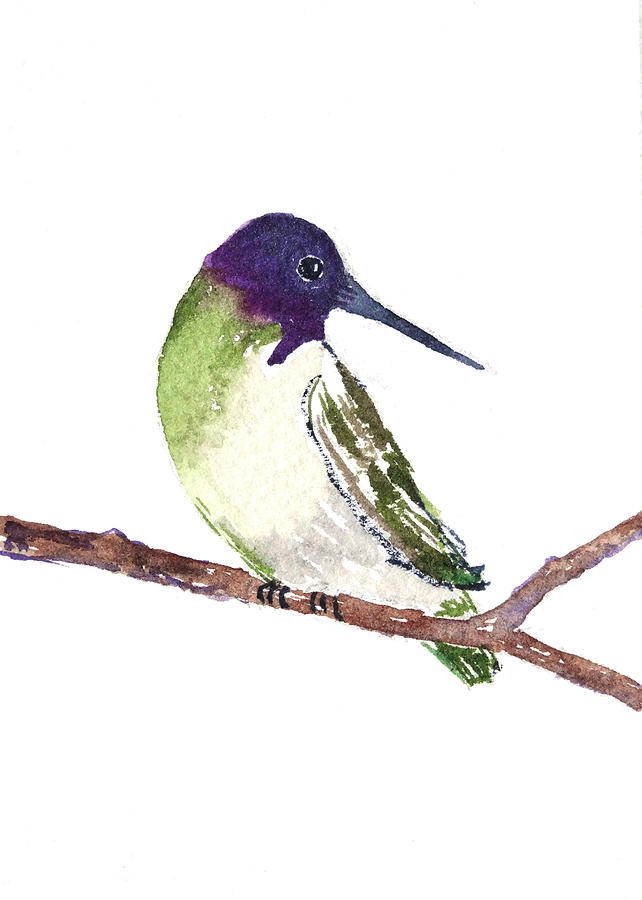 Hummingbird Painting - Costa Hummer by Renee Chastant