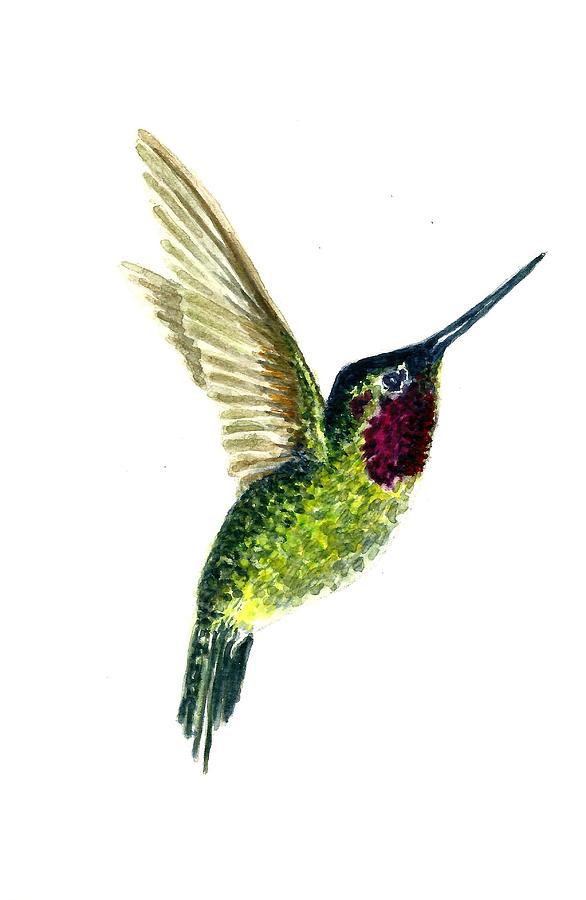 Animals Painting - Costas Hummingbird by Michael Vigliotti