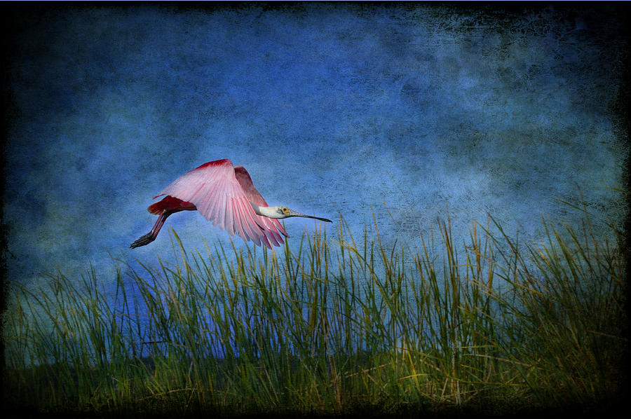 Spoonbill Photograph - Cotton Candy by Eagle  Finegan