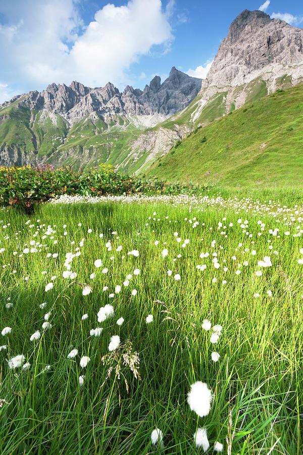 Cotton Grass In A Meadow, Allgäuer Alps Photograph by Ingmar Wesemann