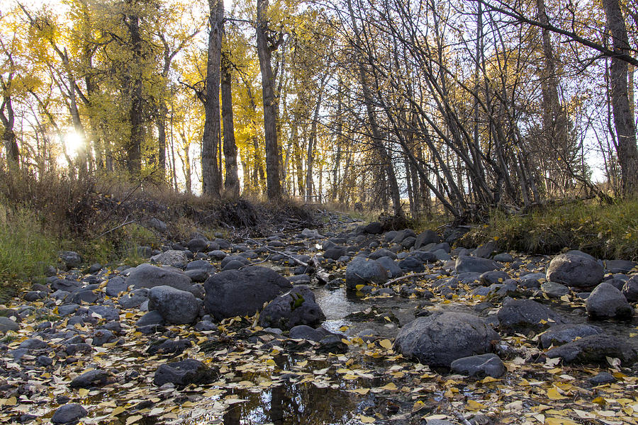 Autumn Photograph - Cottonwood Creek Near Deer Lodge Montana by Dana Moyer
