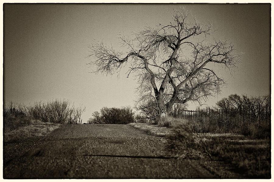 Tree Photograph - Cottonwood by Jeanne Hoadley