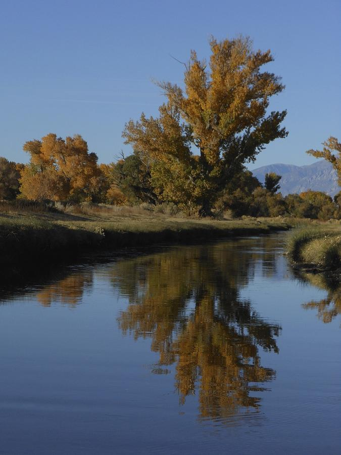 Cottonwood Trees and Reflections by Don Kreuter