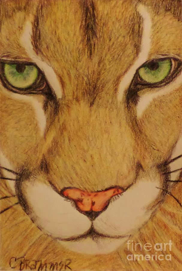 Cougar Drawing